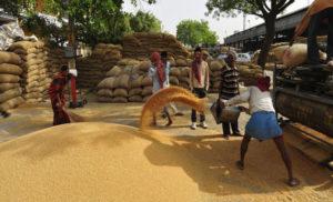 गेहूं का रिकॉर्ड उत्पादन, पर रोटी नहीं होगी सस्ती