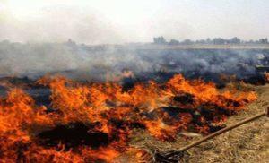 पंजाब और हरियाणा में पराली जलाने की घटनाएं बढ़ीं